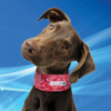 Aqua Coolkeeper Cooling Collar Red Western