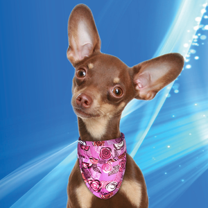 Aqua Coolkeeper cooling Pet Bandana