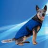 Aqua Coolkeeper Cooling Pet Jacket Pacific Blue
