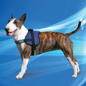 Aqua Coolkeeper Cooling Survival Harness Pacific Blue