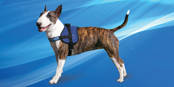 Aqua Coolkeeper cooling Survival Harness