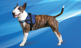 NEW PRODUCT : Cooling Survival Harness